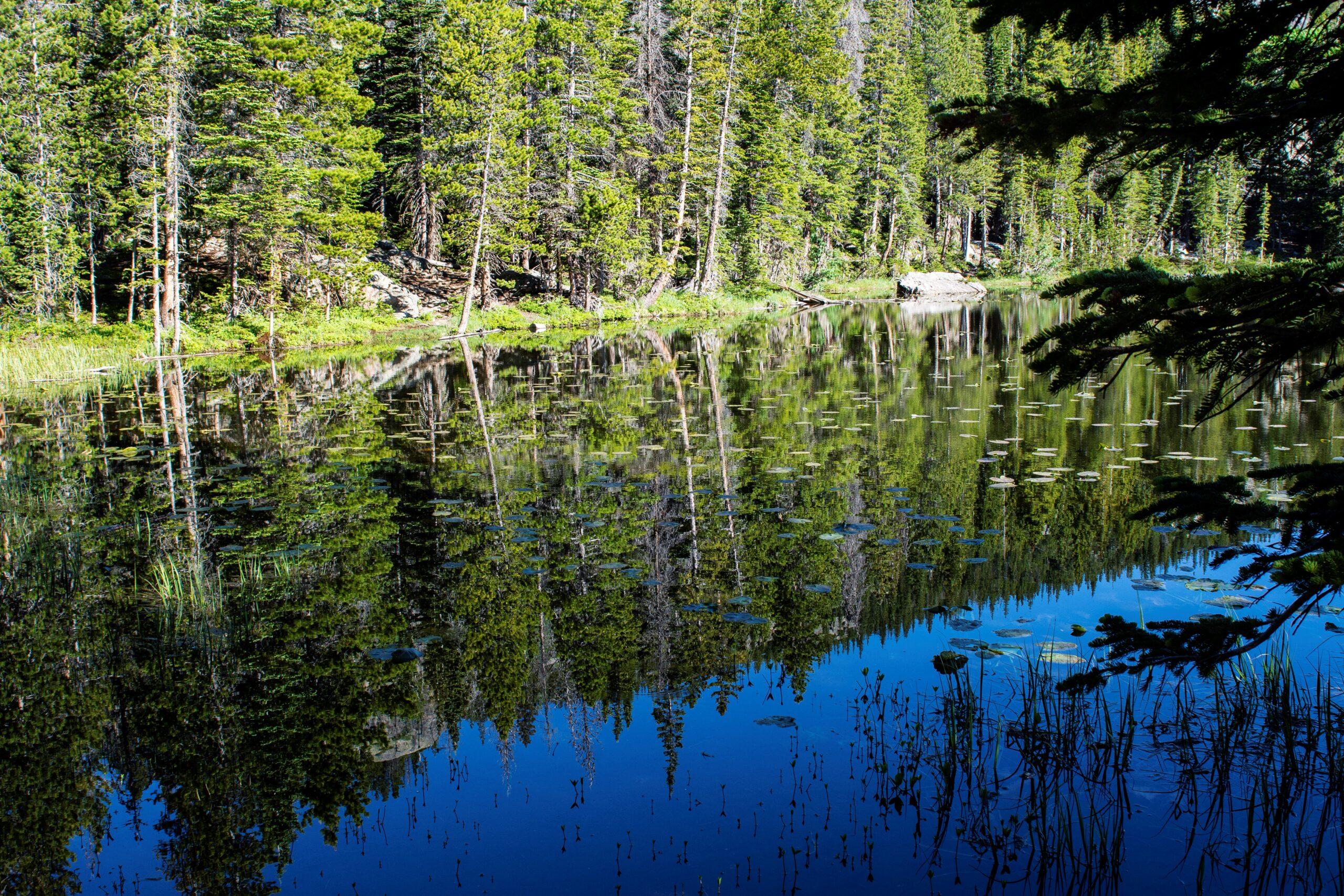 השתקפות היער באגם