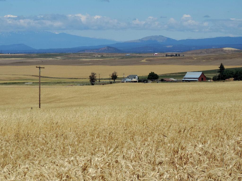 חווה חקלאית בארה