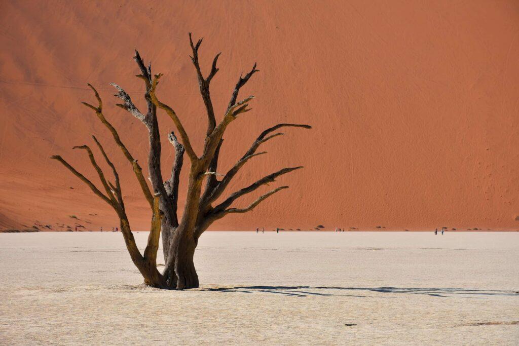 עץ יבש בעמק המוות נמביה